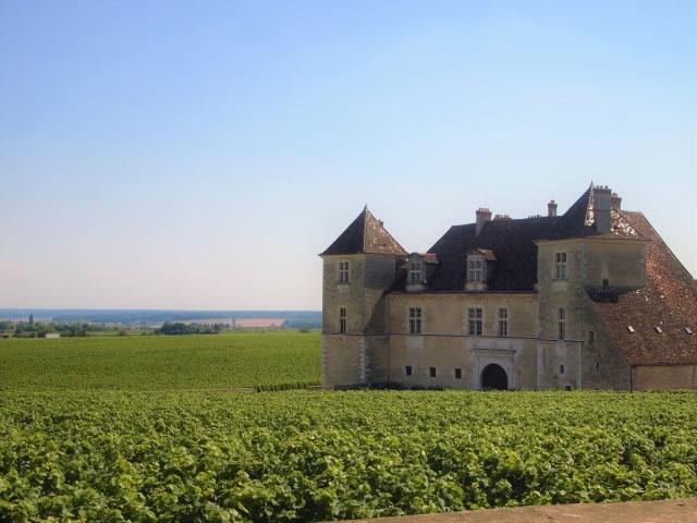 ブルゴーニュのワイン用ブドウ畑