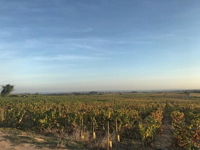 ブルゴーニュの葡萄畑