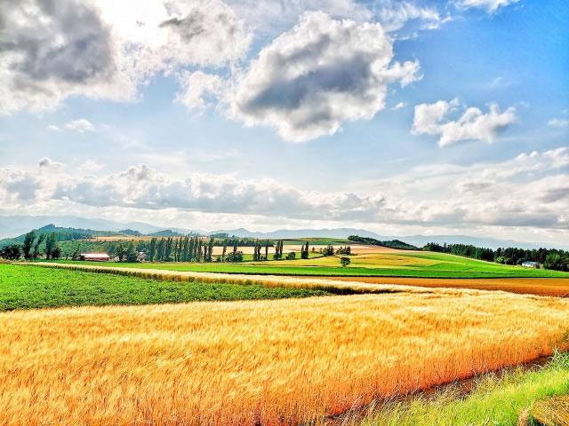 富良野市の田園風景