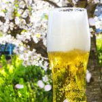 お花見の桜とビール