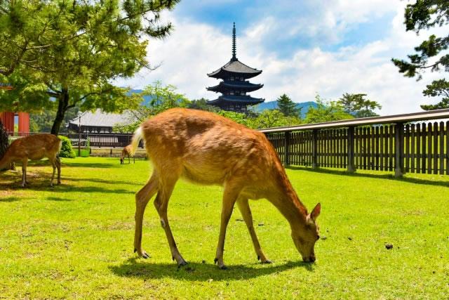 奈良公園の鹿と国宝五重塔