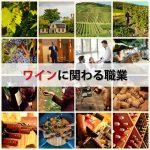 ワイン好きがソムリエやワイナリー醸造家・輸入インポーターの求人・仕事を調べた